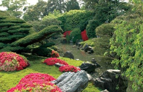 Krizantém (Chrysanthemum) a japán kertekben