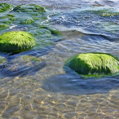 A spirulina jótékony hatása halainkra